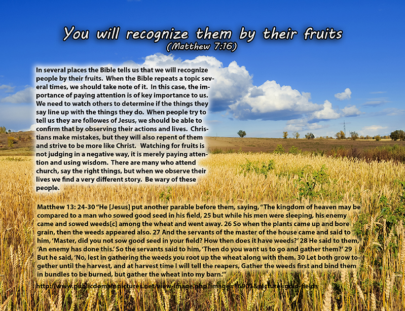 Matthew 7:16  You will recognize them by their fruits. Are grapes gathered from thornbushes, or figs from thistles?